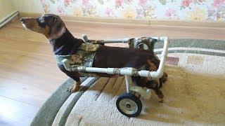 как сделать коляску для собаки