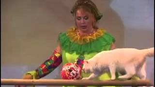 8-926-887-45-65 Дрессированные кошки шоу  http://дрессированные-животные.рф/dressirovannye-koshki