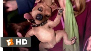 Scooby-Doo (6/10) Movie CLIP - Scrappy-Doo (2002) HD