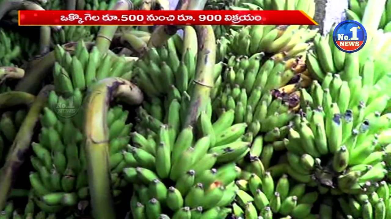 Success Story Of Banana Farming No 1 News Youtube