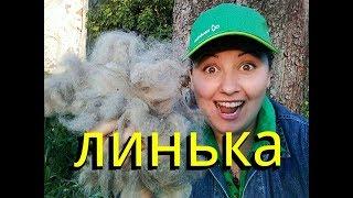 ЛИНЬКА и УХОД за немецкой овчаркой. Мокрый нос Бейлис