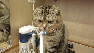 Кот чистит зубы. Смешной кот Василек - чистюля.