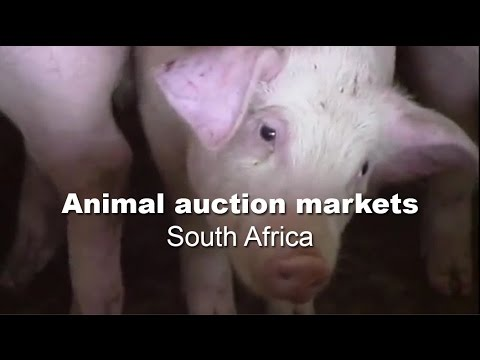 Animal Auction Markets - South Africa