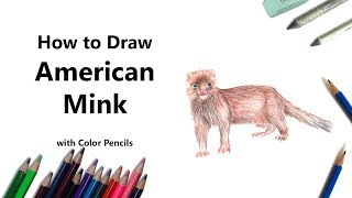 How to Draw a American Mink with Color Pencils [Time Lapse]