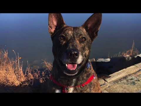 PAW Rescue Maryland: Teagan