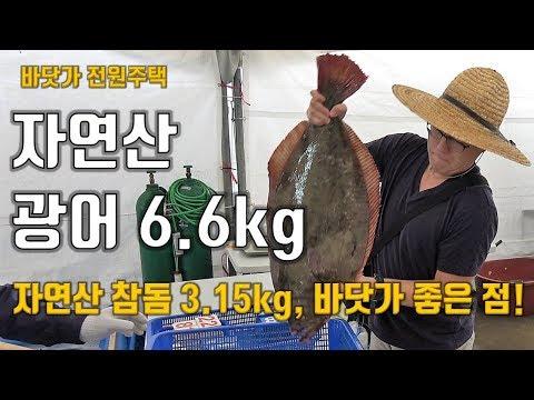 자연산 광어 6.6kg, 자연산 참돔 3.15kg, 난생 처�
