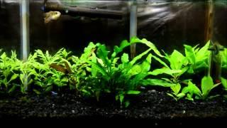 update 10g german blue ram planted tank