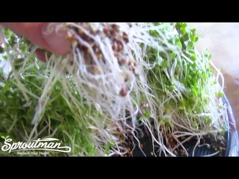 Washing Broccoli Sprouts with Steve Meyerowitz