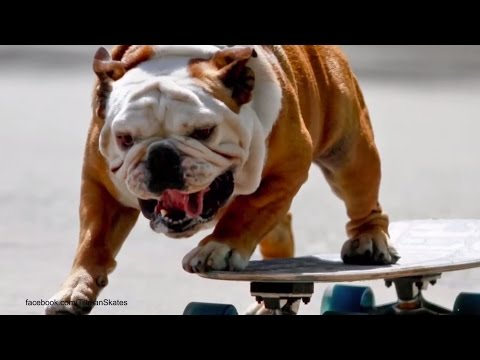 Surf City Surf Dog Competition - Huntington Beach