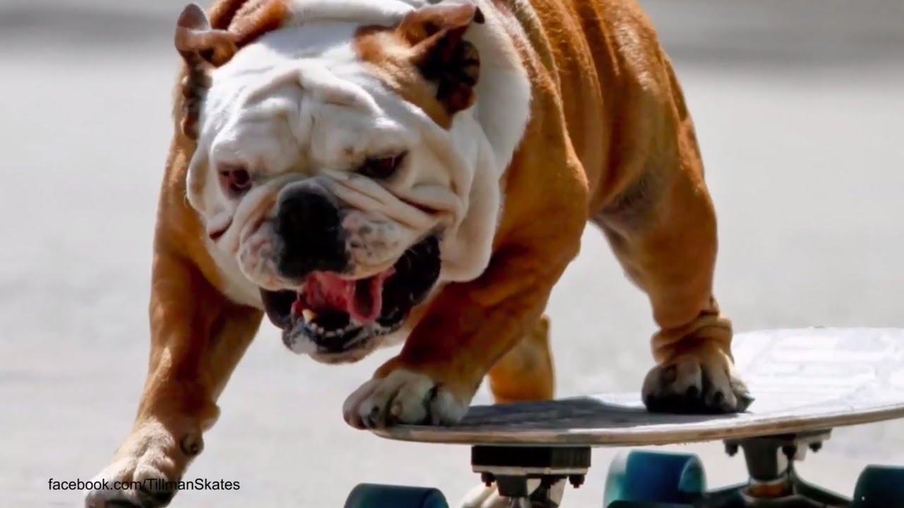 Surf City Surf Dog Competition Huntington Beach Youtube
