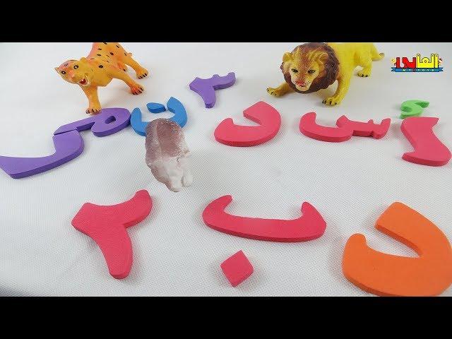 تعليم الحروف العربية للاطفال تعليم الارقام  تعليم الحيوانات البرية للاطفال ولاد وبنات alphabet
