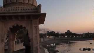 Rosy Starlings murmurations at Lakhota lake, Jamnagar