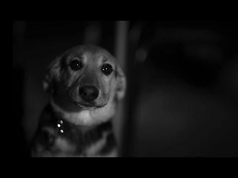 Собаки. Урок 72. Фотошкола Олега Зотова.