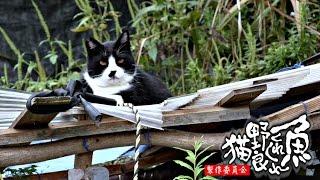 【地域猫】無慈悲なチビの振る舞いに、軽く殺意を抱いた。【魚くれくれ野良猫】 thumbnail