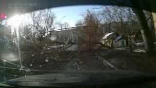 Упало дерево в Саратове. 7.12.2015