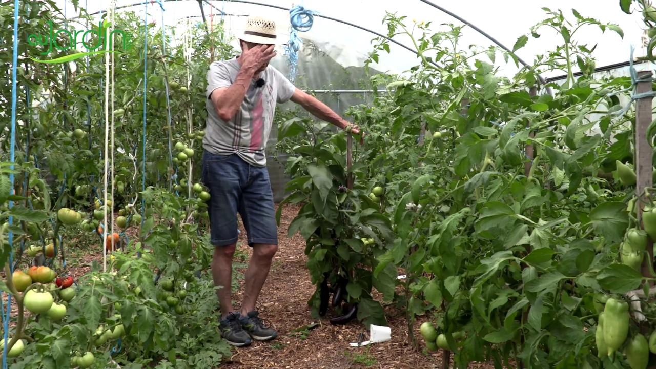 Que Planter En Octobre Sous Serre entretien des plantations de légumes sous serre