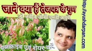 Medicinal Importance of Tamalapatra/Tej Patta/Indian bay leaf/Cinnamomum tamala