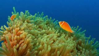 Wonderful underwater world part Two- Australia and Oceania Cudowny podwodny świat część 2