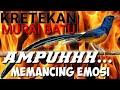 Ketrekan Murai Batu Ampuhhh Memancing Emosi  Mp3 - Mp4 Download