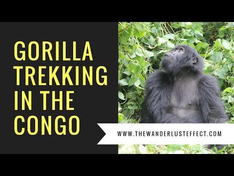 Gorilla Trekking in the Congo