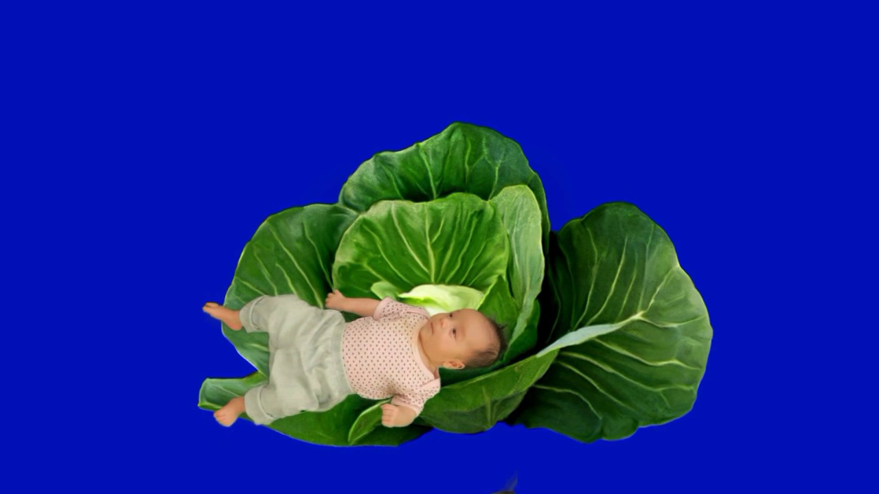Blue screen baby in cabbage - YouTube