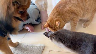 おやつをあげようとするとカワウソも猫も犬も集まって大変なことになる