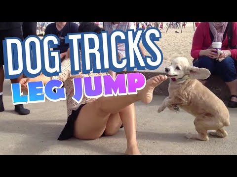 CUTE DOG Jumping Over Girl's Legs (CUTE)  Buster the Cocker