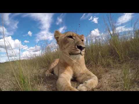 Zimbabwe - Antelope Park 2017