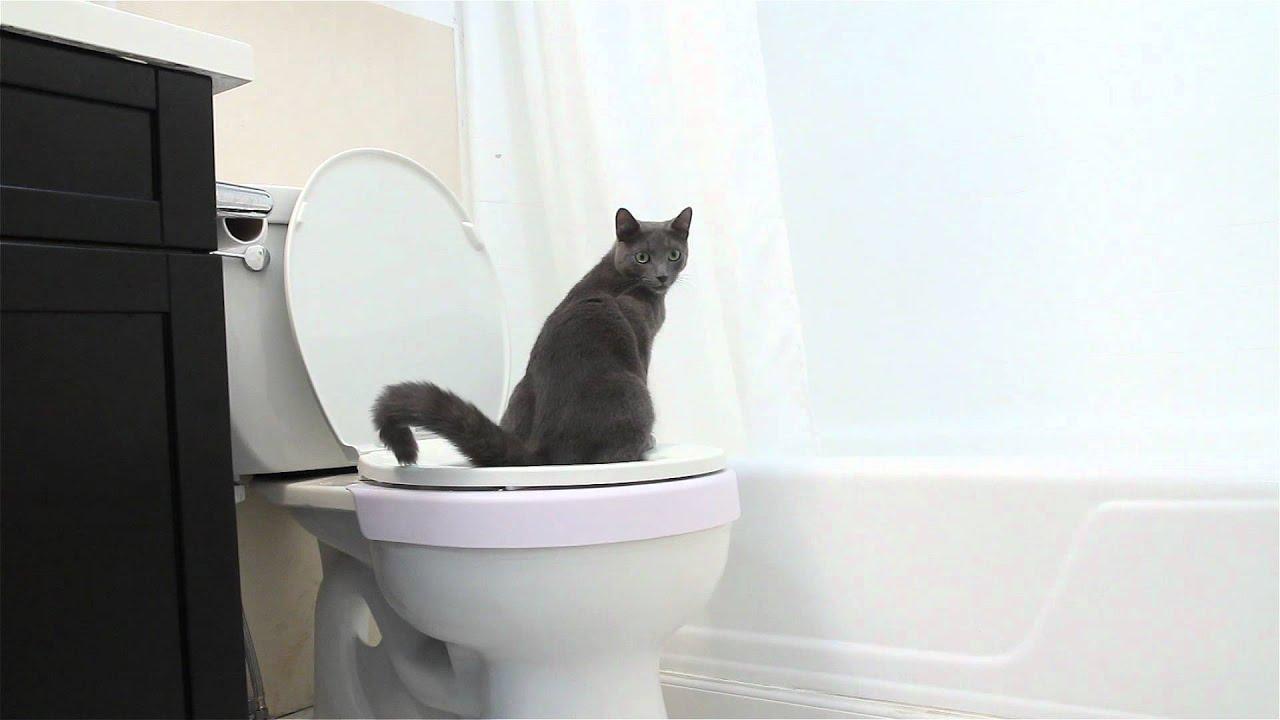 play cat stevens