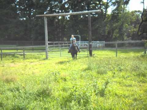 VELVET U/S Western 8-7-12 with Mandy at Scarlet Rose Farm Equine Rescue #4