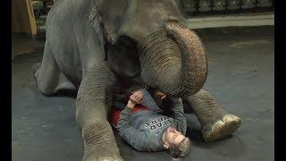 Как приручить слона? МТВ в гостях у цирка «Инди-Ра»