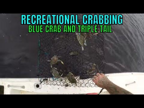 RECREATIONAL CRABBING FOR FLORIDA BLUE CRAB...