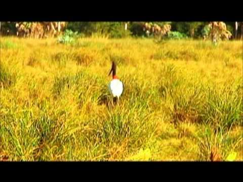 Fauna-alto Paraguay.wmv