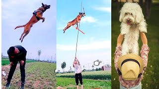 Amazing Flying and Jumping Dog Videos ||TikTok Compilation||Cute and Funny Pets