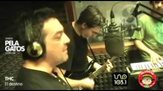 THC - Reggae en PelaGatos - El destino