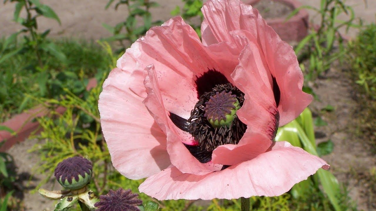 Simply Beautiful Flowers Choice Image Flower Wallpaper Hd