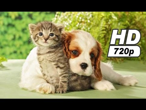 Still a lot of puppies and kittens 2016 HD