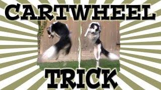Cartwheel Dog Trick - Clicker Dog Training
