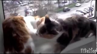 Смешное видео про животных  Подборка 2015