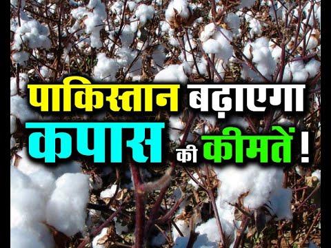 #pakistan#cotton#kapas#narmaपाकिस्तान बढ़ाएगा कपास की कीमतें ! Cotton Prices May Upside