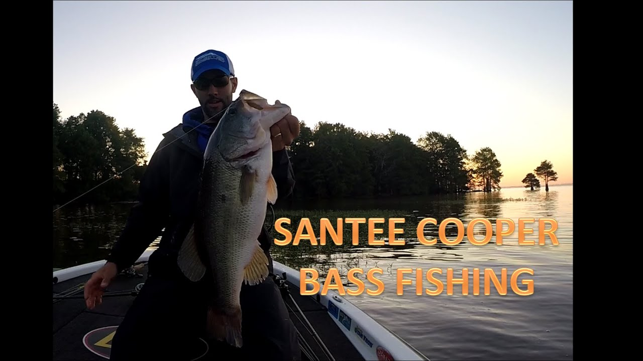 Santee cooper bass fishing youtube for Santee cooper fishing report