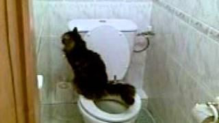 Кошка Жужа ходит на унитаз!