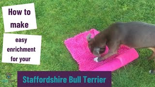 How to make a easy enrichment for your Staffordshire Bull Terrier
