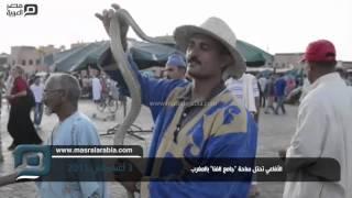 مصر العربية |  الأفاعي تحتل ساحة