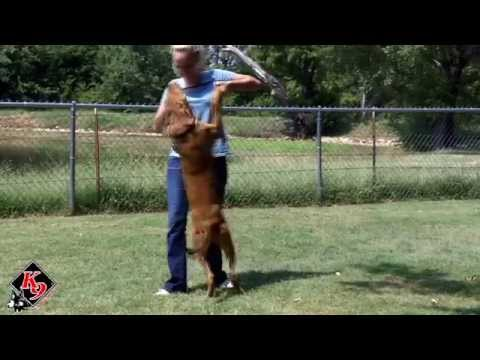 stop-your-dog-from-jumping---3-day-challenge