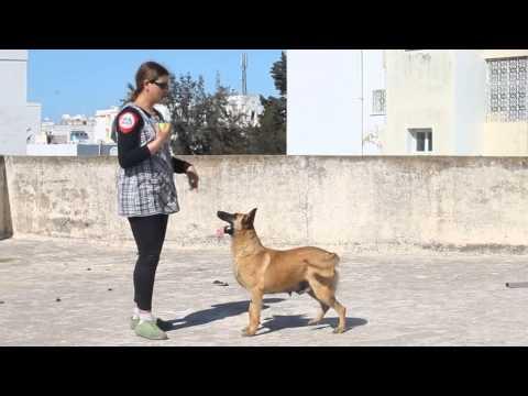 اخطر 10 كلاب فى العالم | Doovi