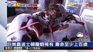8公斤巨無霸龍蝦 客人出價10萬店家不賣