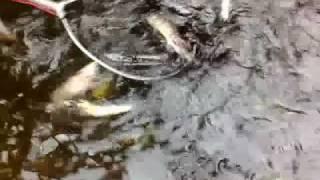 electrofisher samus725mp