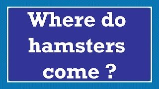 Where do hamsters come ?