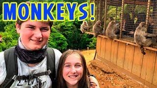 Japan Bamboo Forest and Monkey Park in Amazing Arishiyama Kyoto